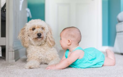 How Often Carpets Should Be Professionally Cleaned