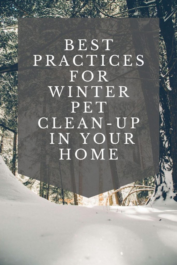 best practices for winter pet clean up in your home graphic